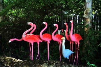 Will Ponweiser's flamingo sculptures on the Pacific Highway at Woodburn.
