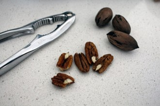Local pecans attracted the attention of Stephanie Papillo from The Friendly Little Kitchen.